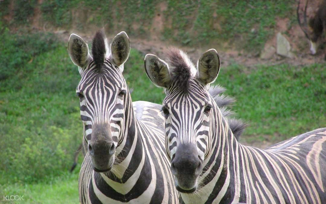 在参观各种动物的同时还可以观看动物们的精彩表演,十分有趣!