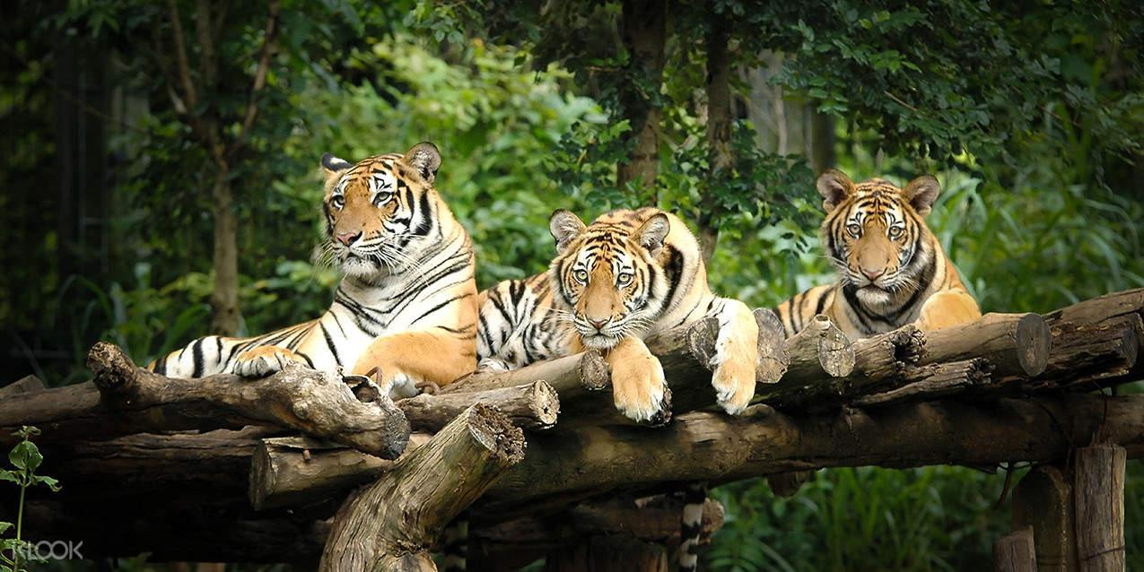 晚上不想睡觉,最适合去动物园看老虎丶大象丶犀牛等动物,观察他们