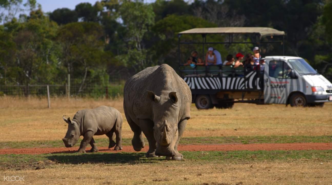 威瑞比野生动物园犀牛