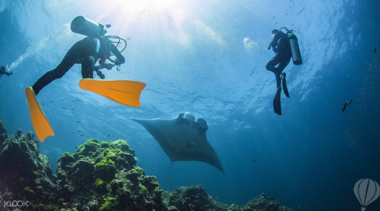 与鱼儿及海洋生物们共游海水世界