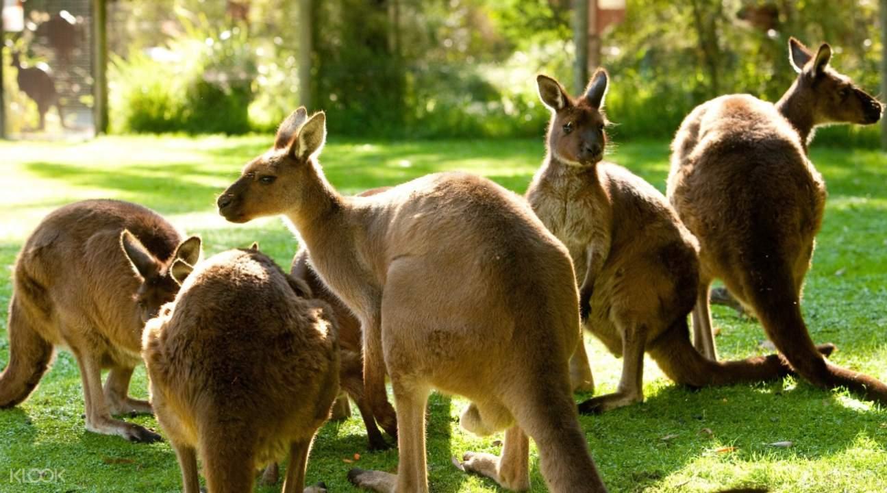 希斯维尔野生动物保护区门票