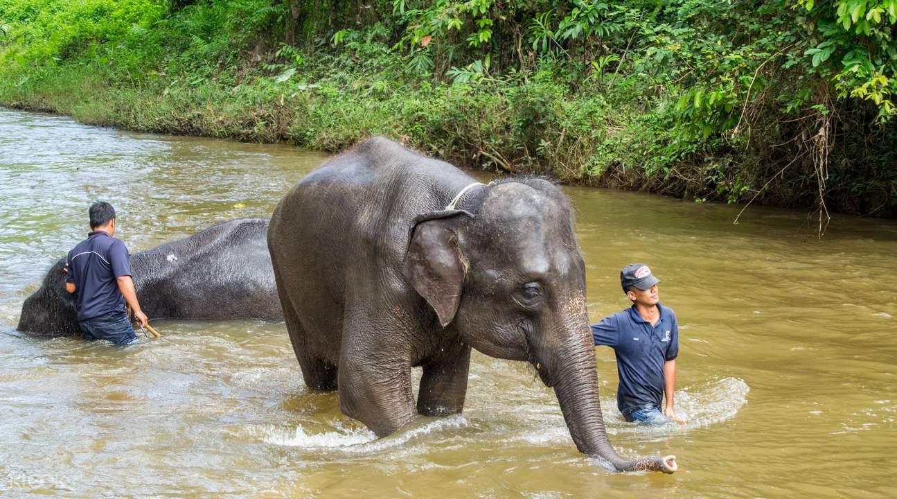 可爱大象没背景