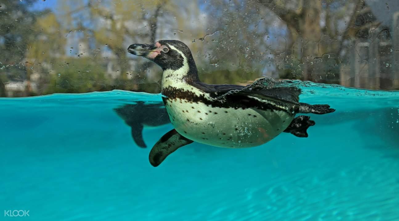 动物品种非常丰富,包括热带动物,爬行动物,夜行动物等等,收藏量是