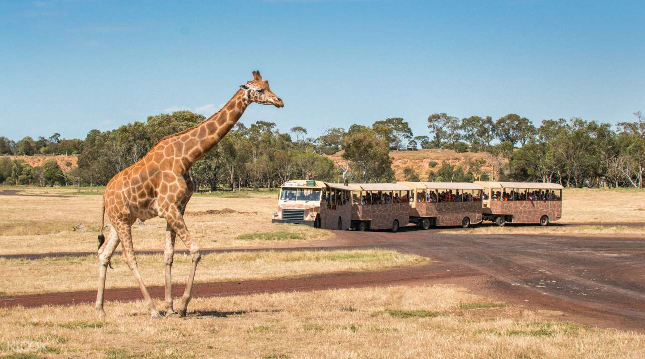 威瑞比开放式野生动物园门票