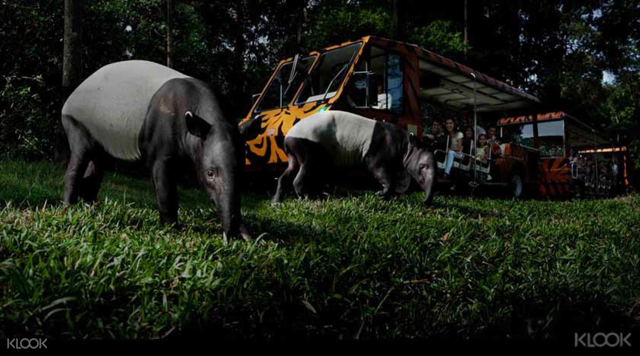 新加坡夜间野生动物园门票(开放日期)