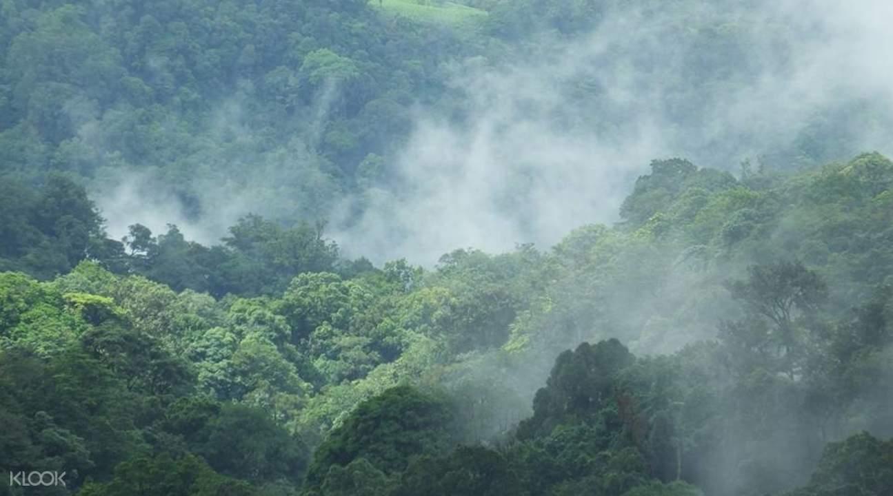 幽暗森林风景坐标