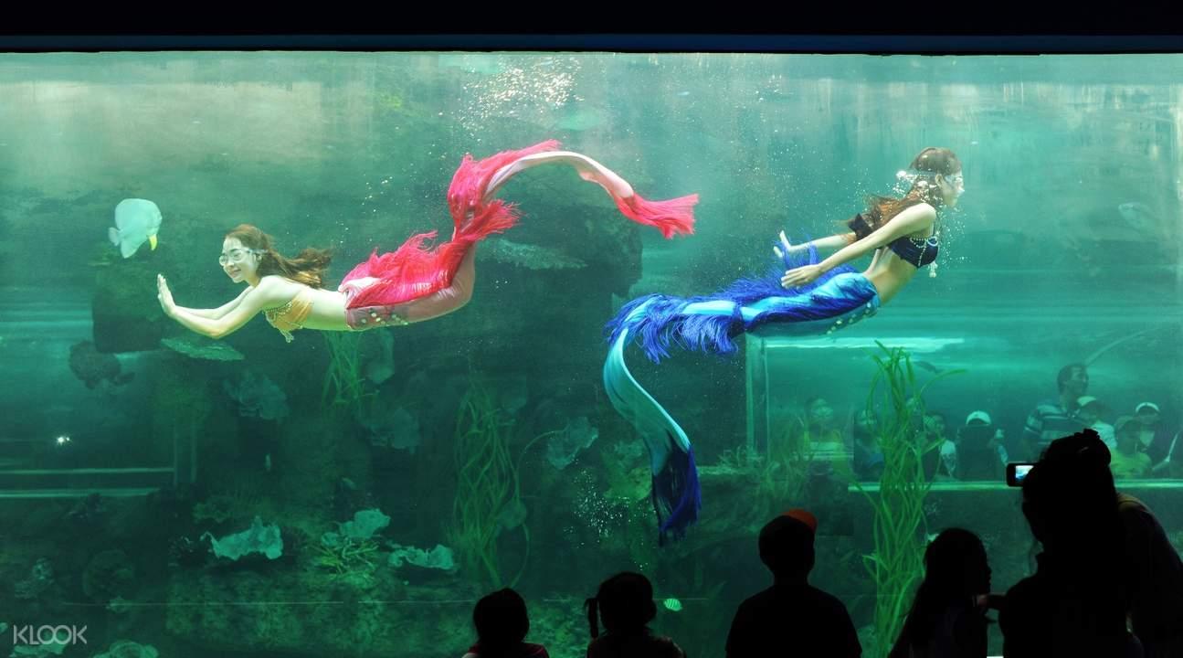 乐园内还有一个大型海底世界,在这里观赏丰富多样的海洋生物,观看海豚