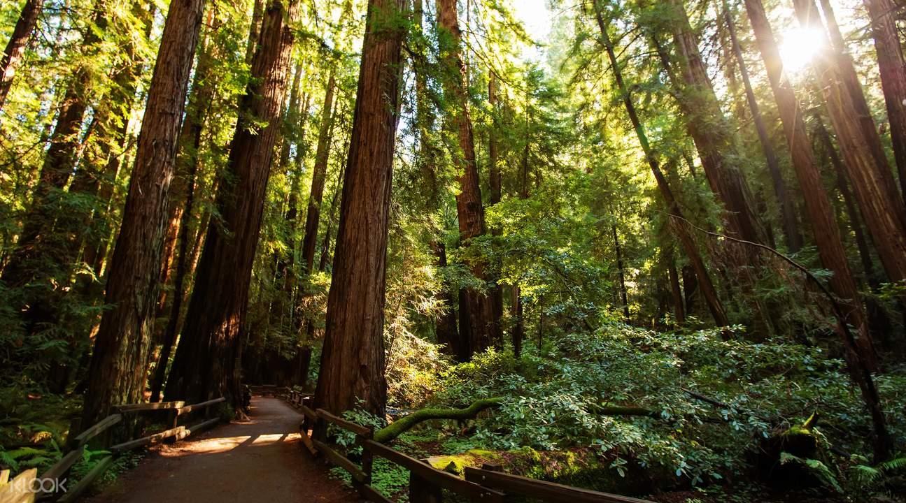 区角牌设计图片森林系