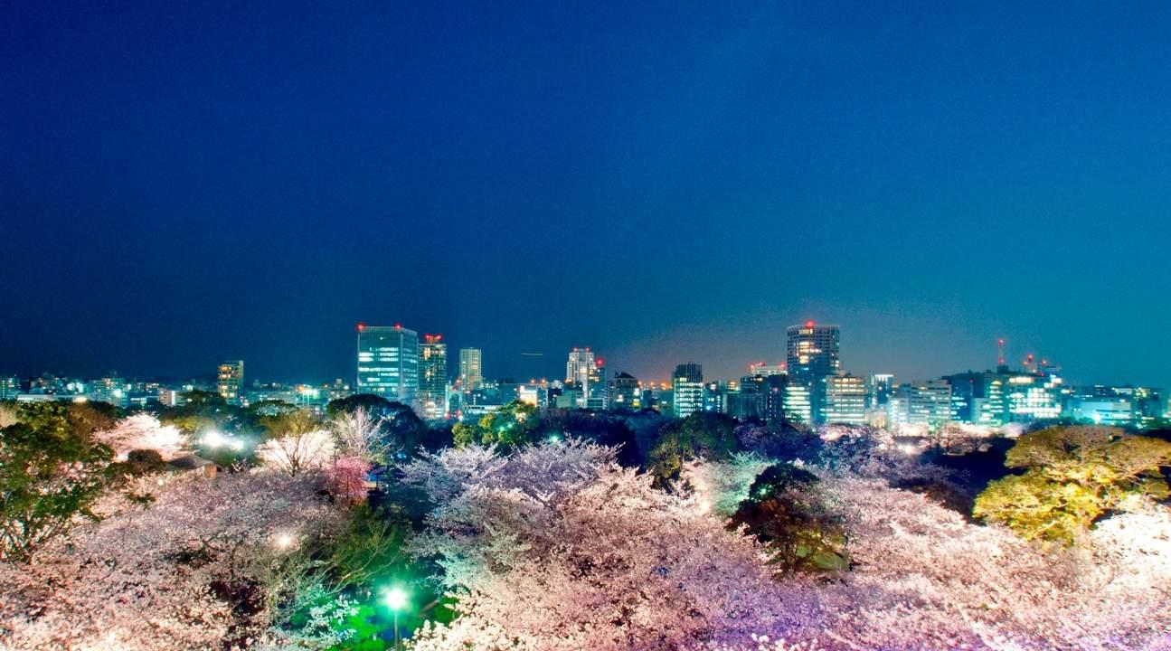 福冈舞鹤公园夜樱 & 和风会席料理晚餐半日游(中文导游)