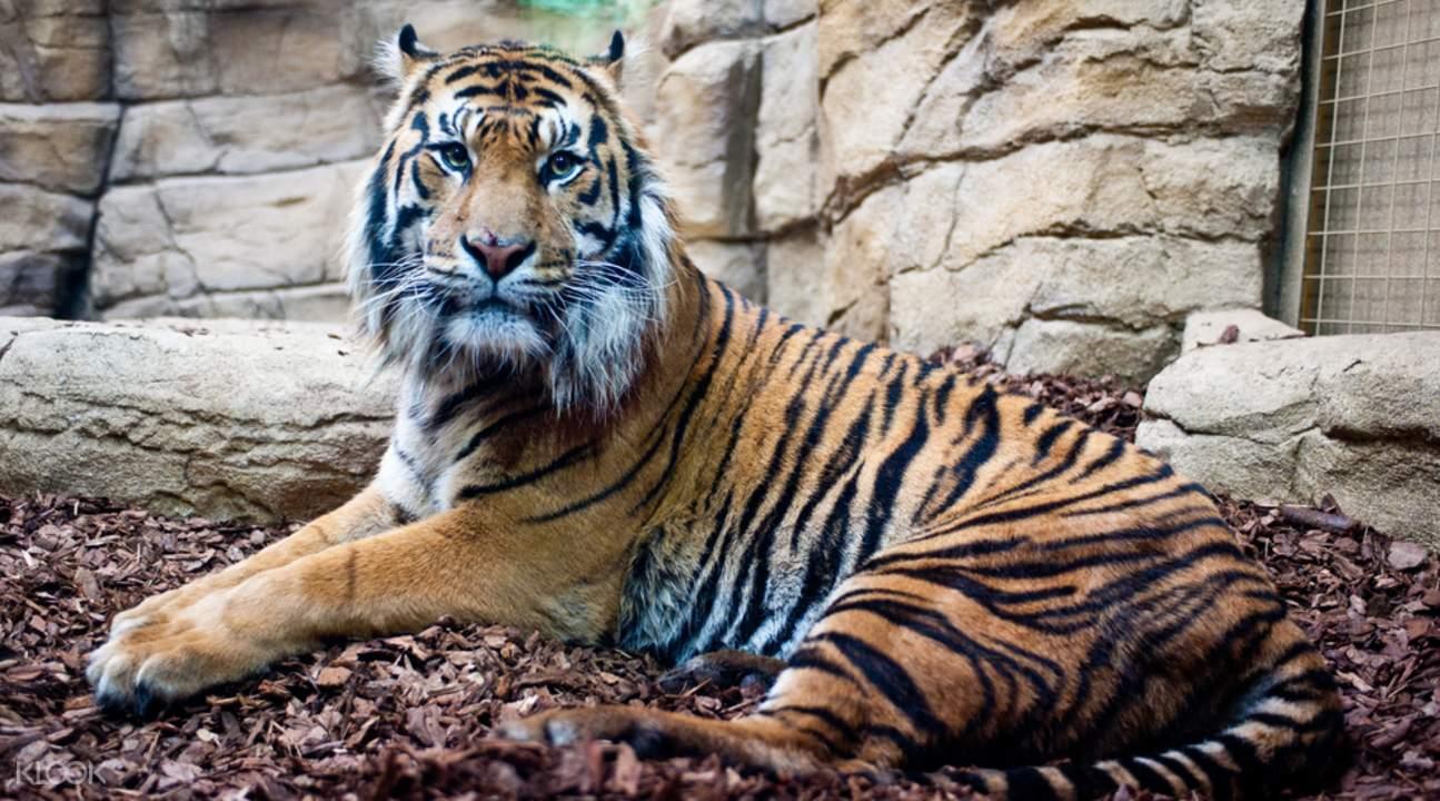 探索世界上最古老的动物园