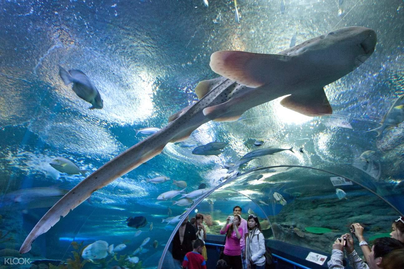 长达100米且拥有丰富海洋动物的海底隧道