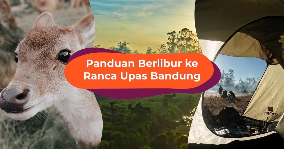 Ranca Upas Bandung: Tempat Camping dan Bertemu Rusa Terbaik di Ciwidey