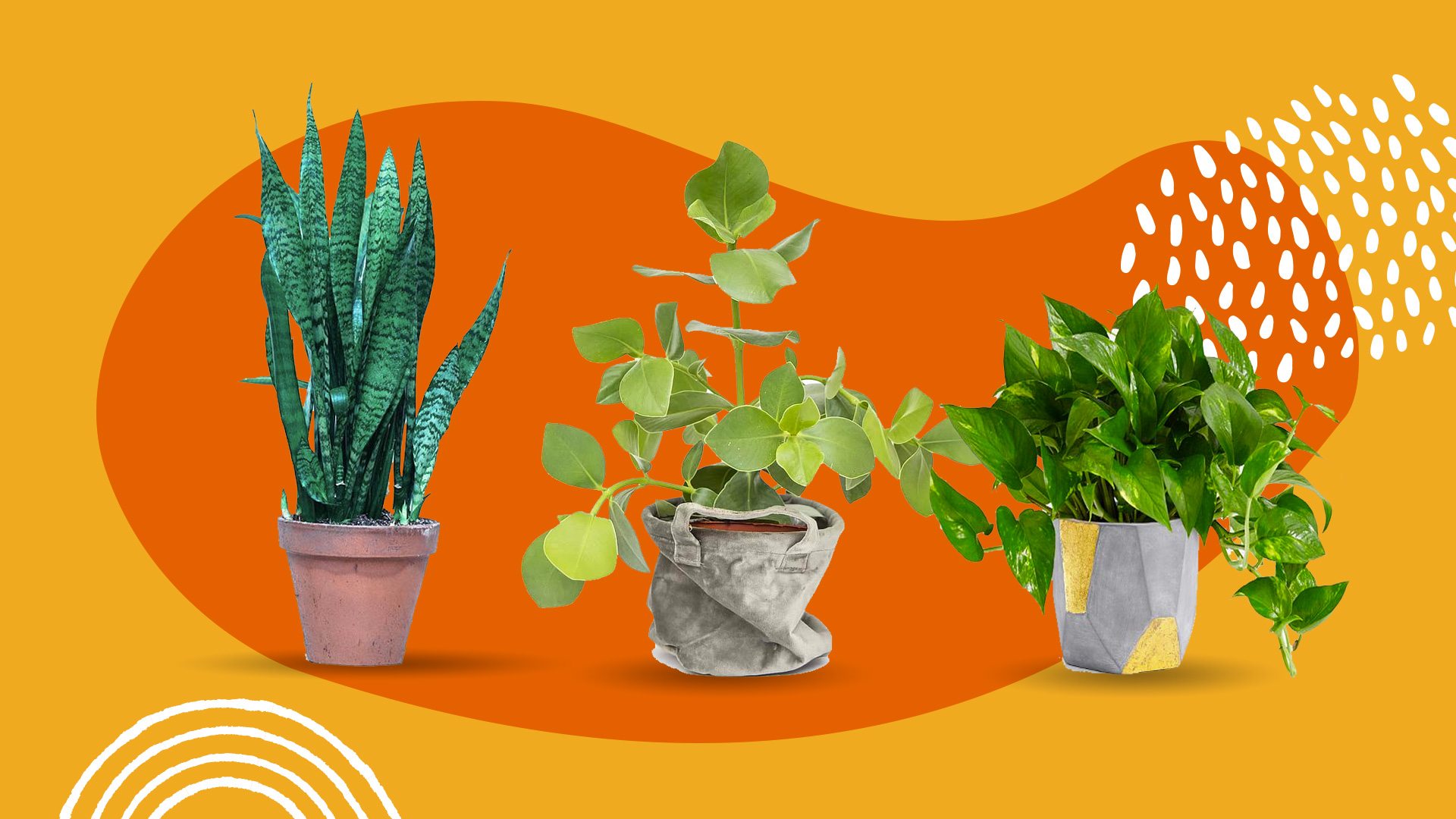 20 Types of Indoor Plants Beginners Won't Have A Difficult Time ...
