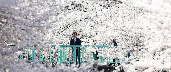 圖片來源:走進日本 jpg