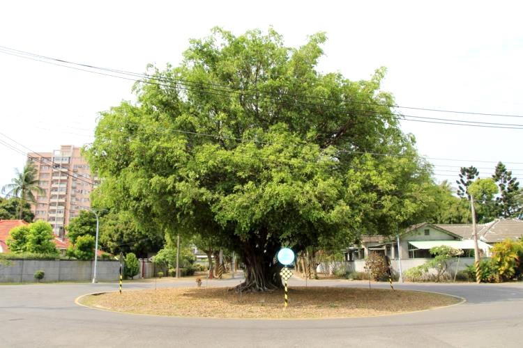 明德新村處處有綠樹圍繞。(圖片來源/高雄旅遊網)