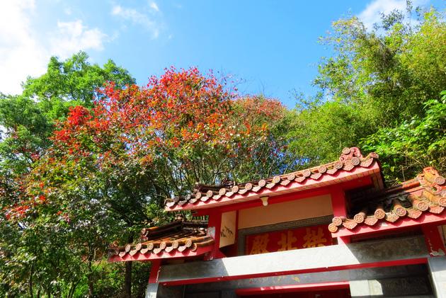 台 北 秘 境 賞 楓 景 點
