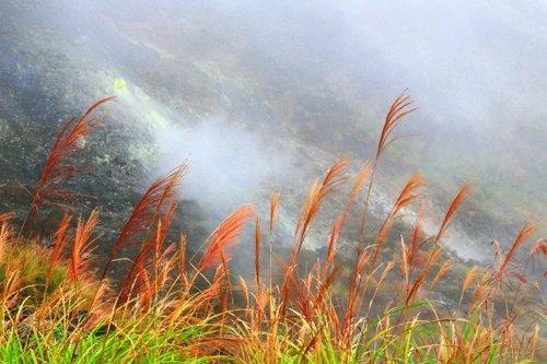靠近小油坑火山噴發處的芒花,呈現出偏紅的特殊色澤。(Flickr授權作者-Andy Enero)