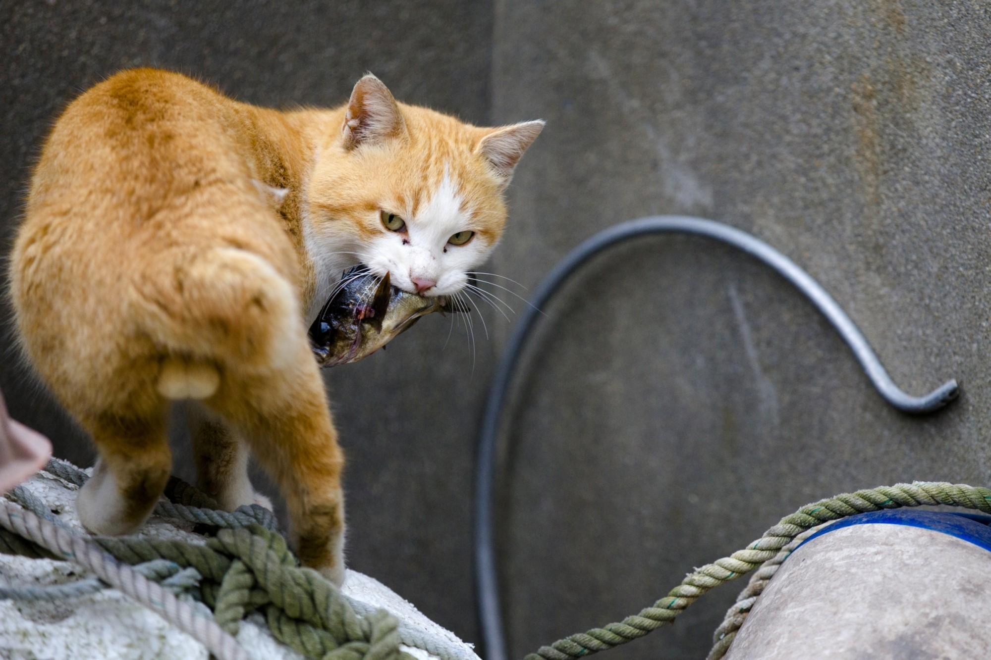 必 去 的 5 個 貓 島 | 圖 片 來 自 : skaties.lv/