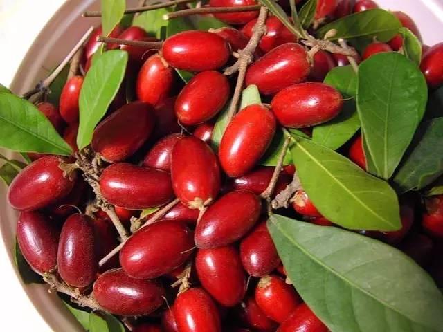 東南亞水果 長 得 像 番 茄 的 神 秘 果 |Flickr@ Dinesh Kumar Radhakrishnan