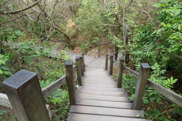 半屏山的木棧登山步道。(圖片來源/高雄旅遊網)