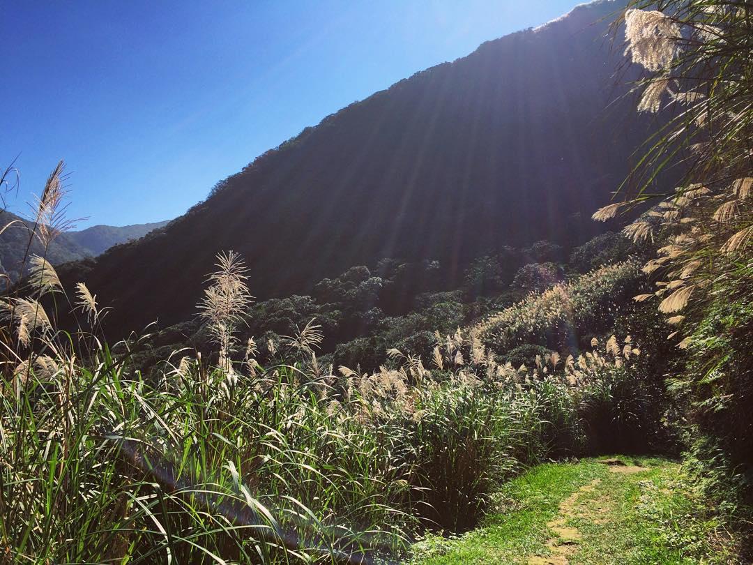 魚路古道兩旁的芒花叢。(圖片來源/Instagram-annyunnnnn)