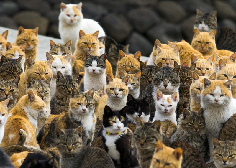 More-cats-less-humans1