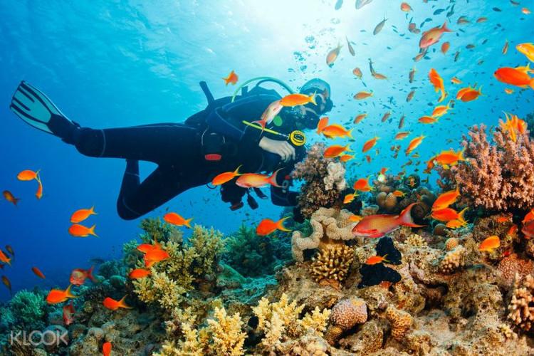 ทำไมเราต้องดำน้ำ 10 ความตื่นเต้นใต้น้ำ