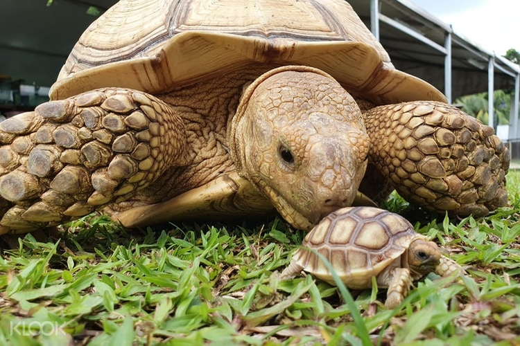 The Live Turtle and Tortoise Museum Admission