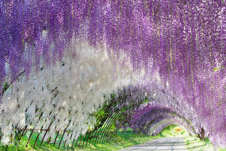 Hitachi Seaside Park And Ashikaga Flower Park Day Trip From Tokyo