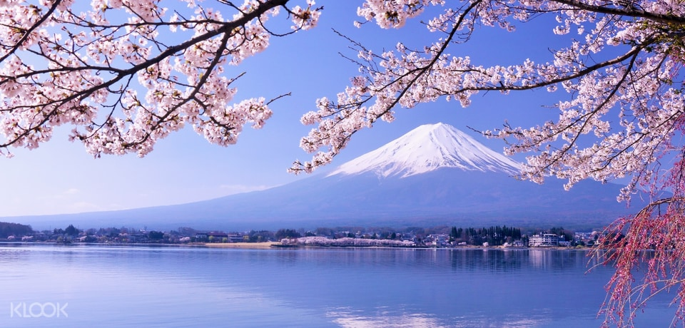 Mt. Fuji Tour