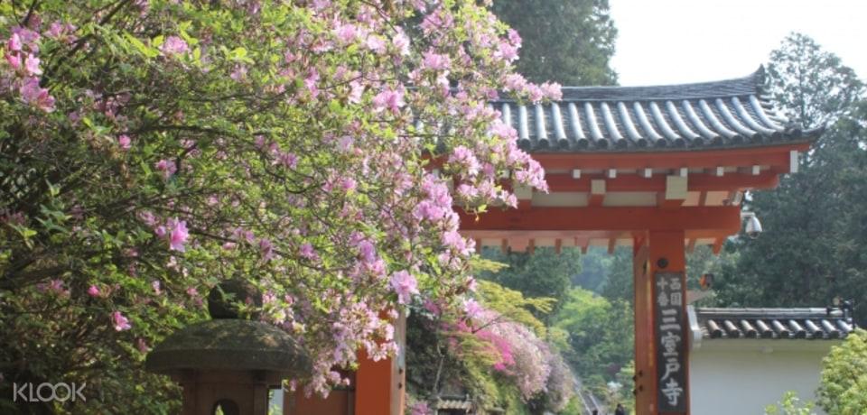 Southern Kyoto Sakura Tour