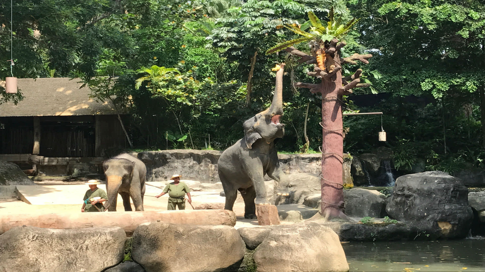 The Klook Guide to Singapore Zoo, River Safari & Night Safari - Klook