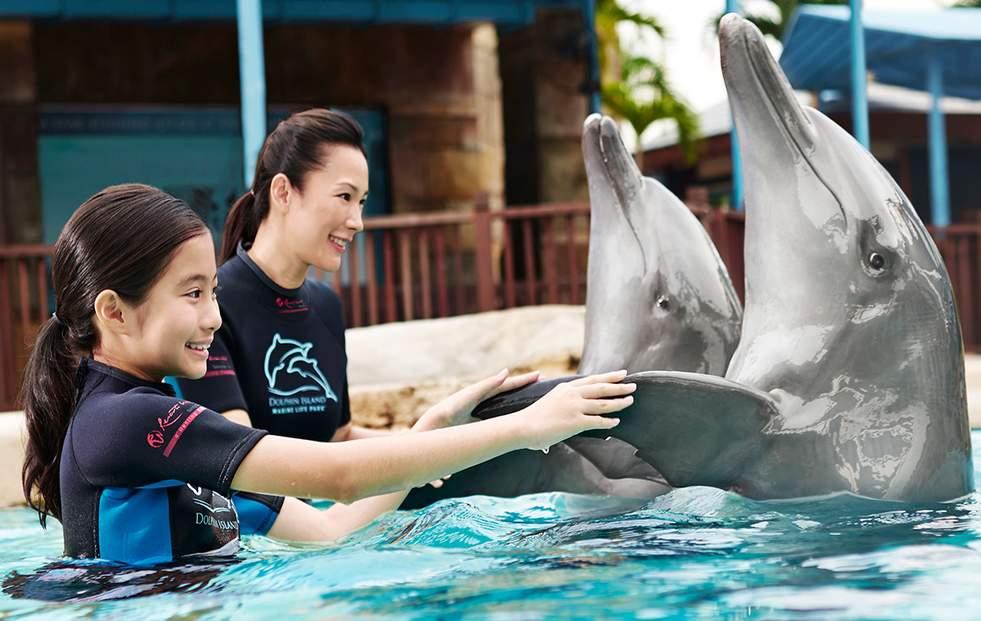 海豚園互動體驗