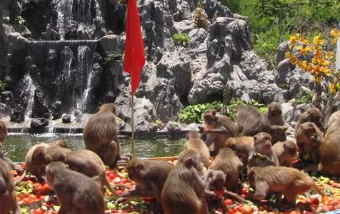 Tour Tham Quan Đảo Khỉ Nha Trang và Tắm Bùn Riêng Trong Ngày