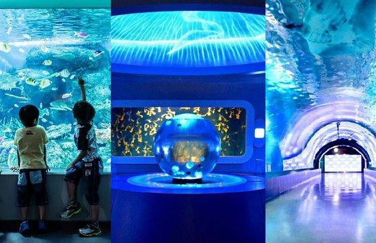 東京近郊 おすすめ水族館10選|次の休日に行くならどこにする?