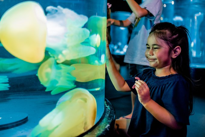Be mesmerised by the diverse marine life with over 700 species at SEA LIFE