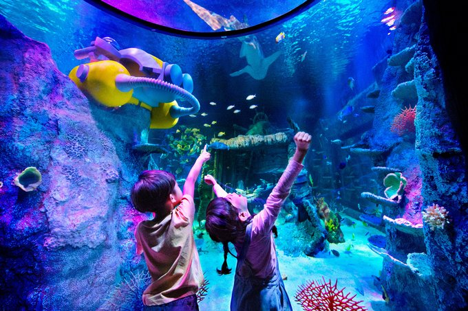 Dine Underwater Surrounded By Graceful Fish And Sharks In ...