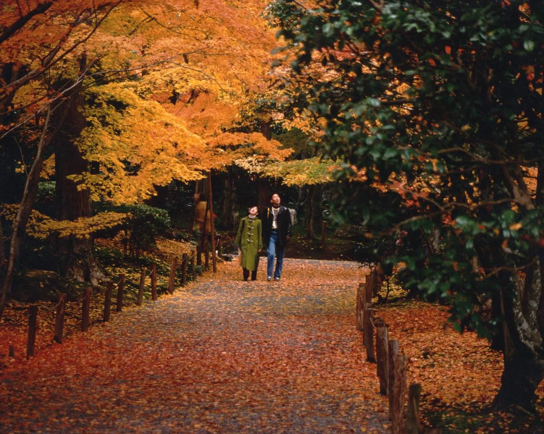 Romantic Autumn Couple Seoul Korea