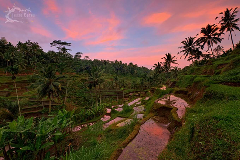 tegalang rice paddies ubud sunset