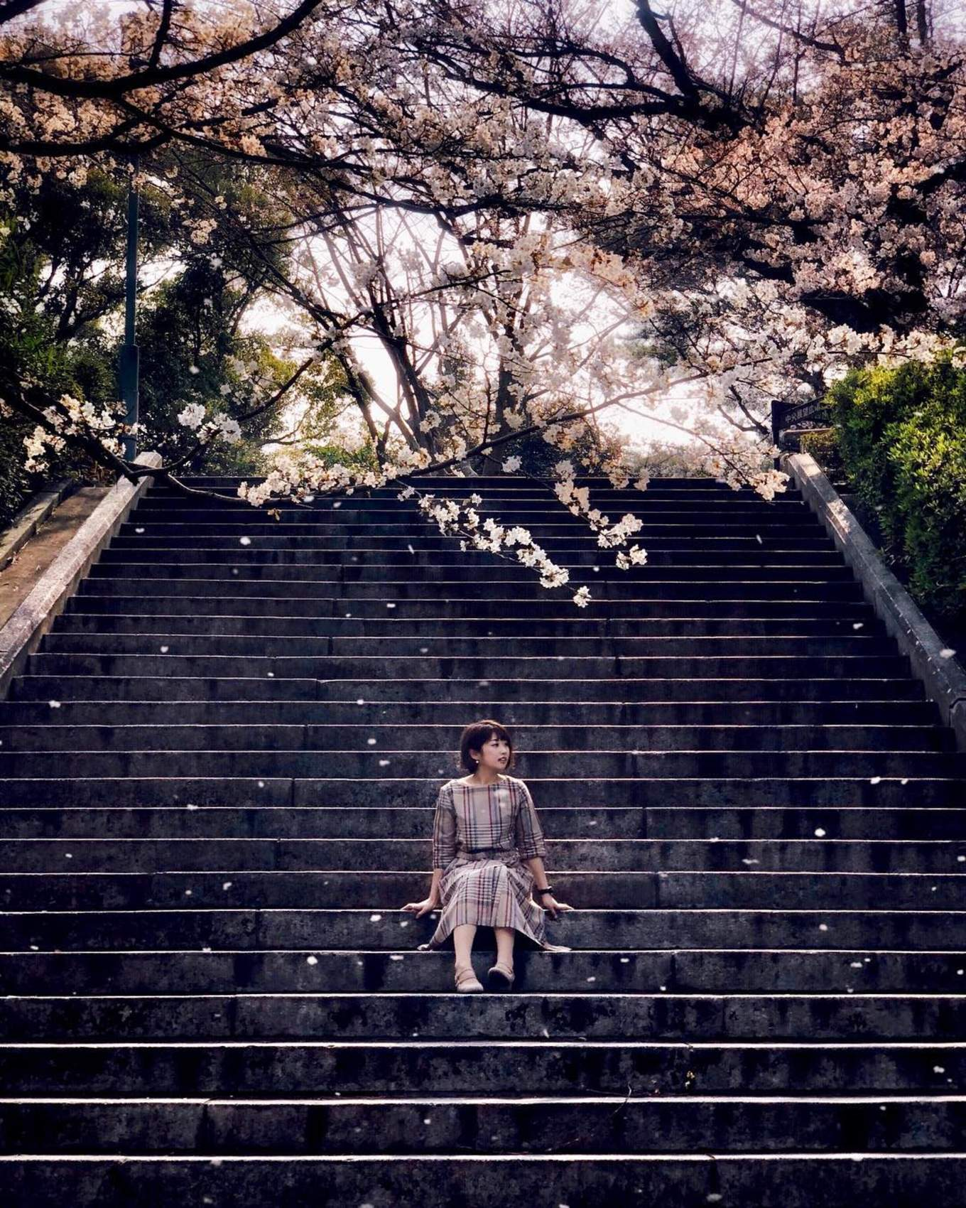 Falling sakura in Nishi Park