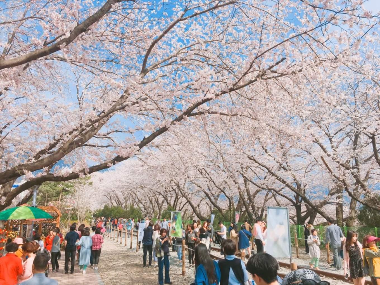Jinhae Gunhangje festival