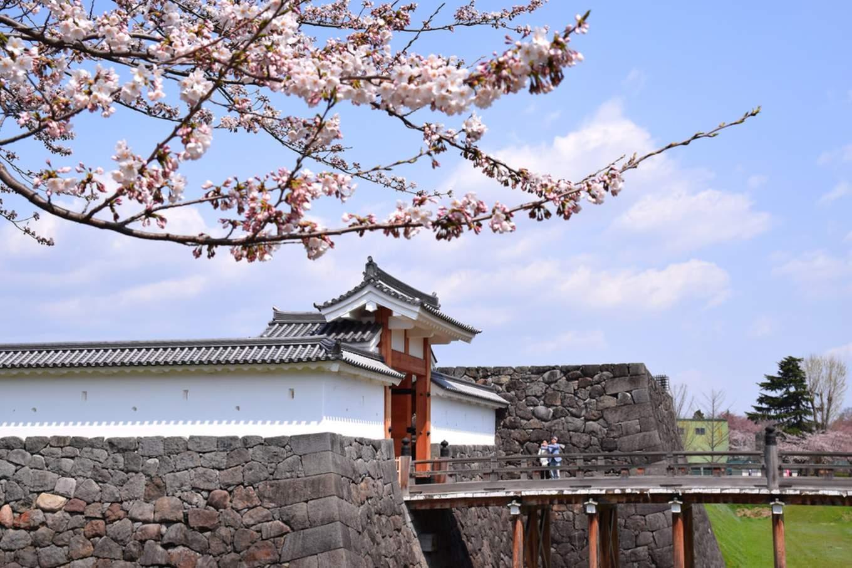 Cherry blossoms outside Yamagata castle