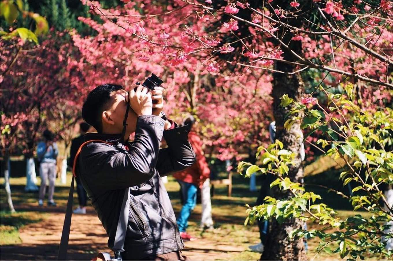 Doi Ang Khang cherry blossoms