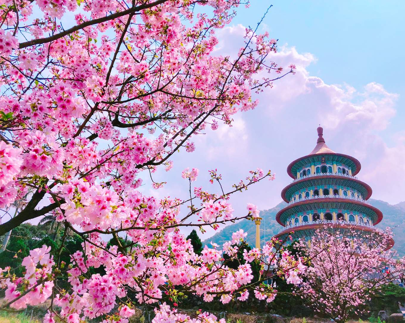 Cherry trees outside the Wuji Tianyuan Temple