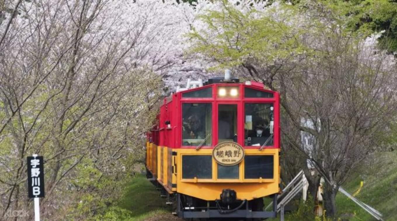 sagano romantic train cherry blossom
