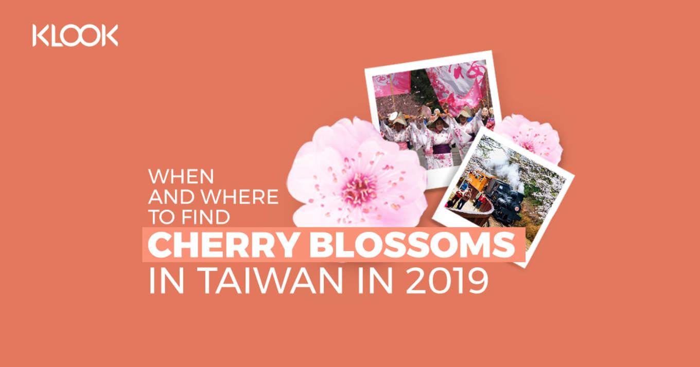 Taiwan Cherry Blossom Forecast 9