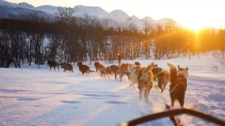 Husky Sledding in Tromso