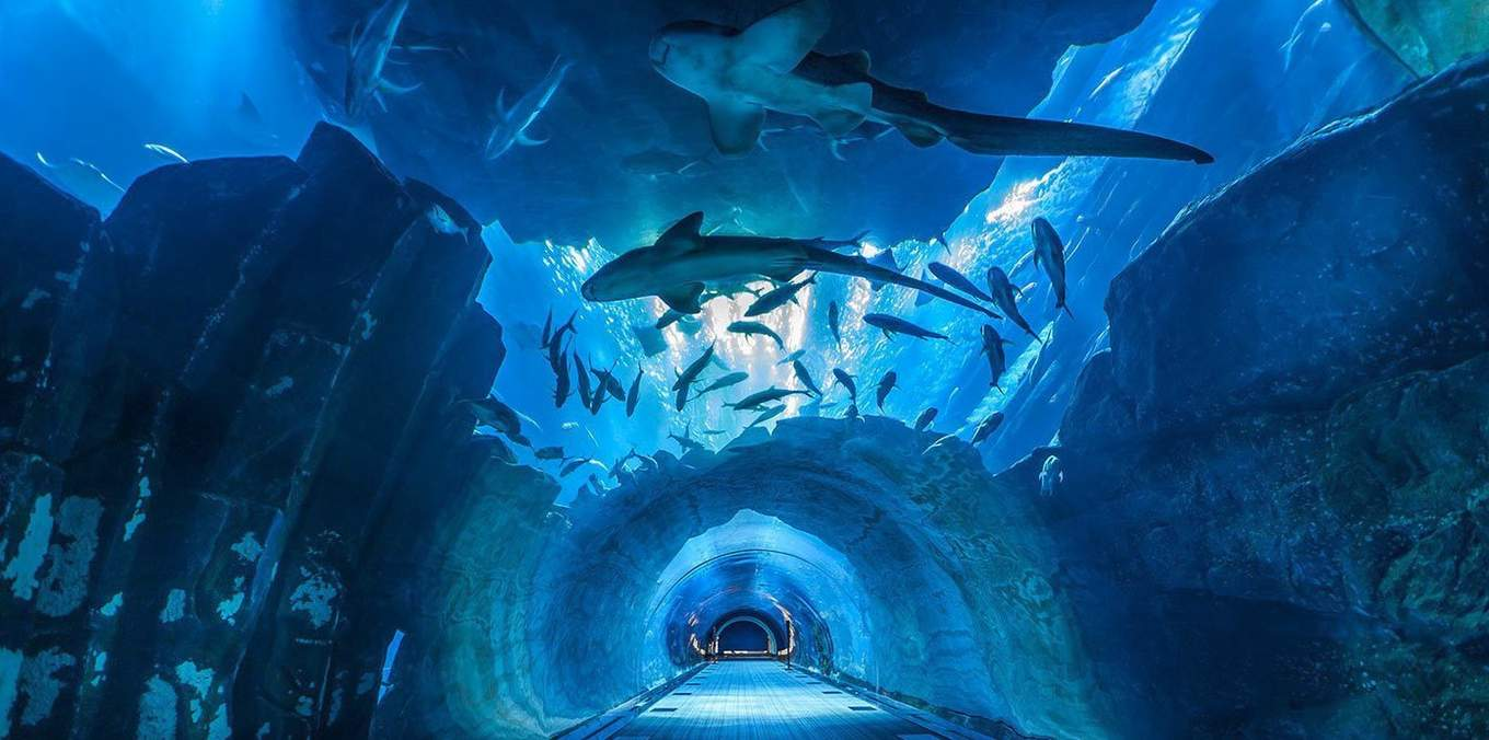 bangkok-bts-guide-sea-life-ocean-world