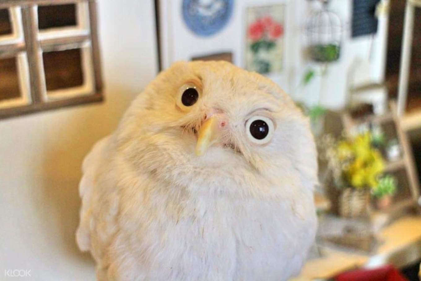 tokyo-subway-guide-owl-cafe