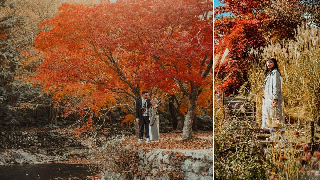 autumn korea